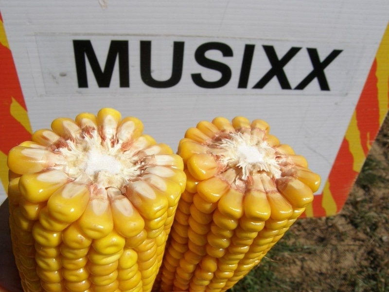 MUSSIX