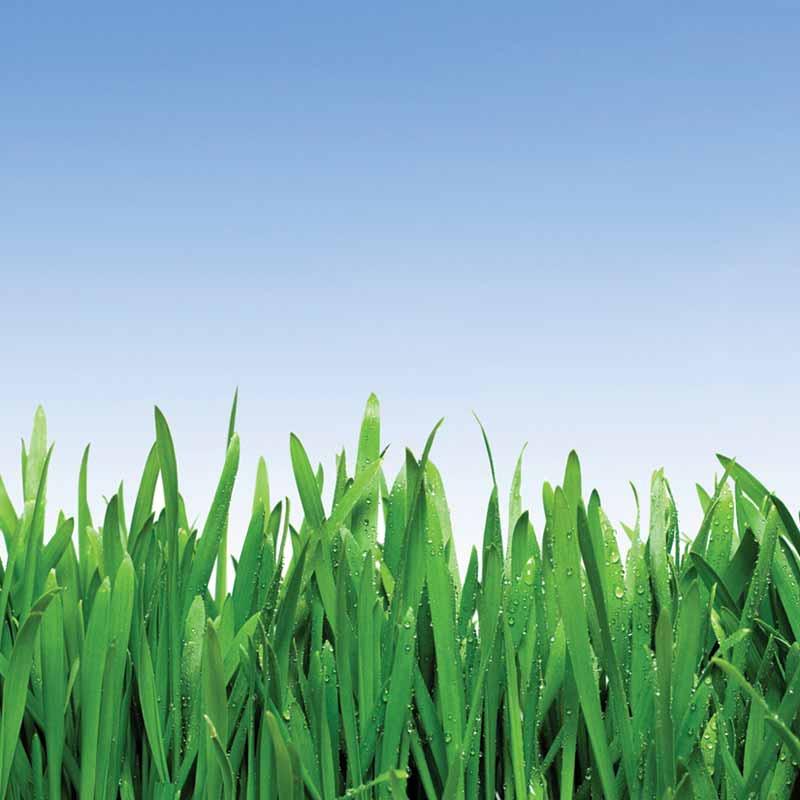 agrosaat-zelenica