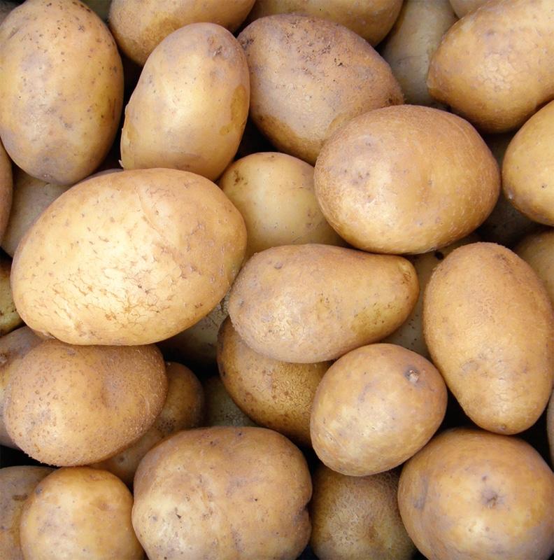 Sorta krompirja Anuschka