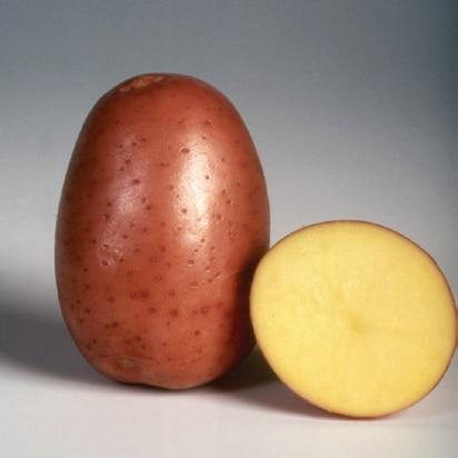 Sorta krompirja Bellarosa