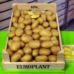 Sorta krompirja Elfe