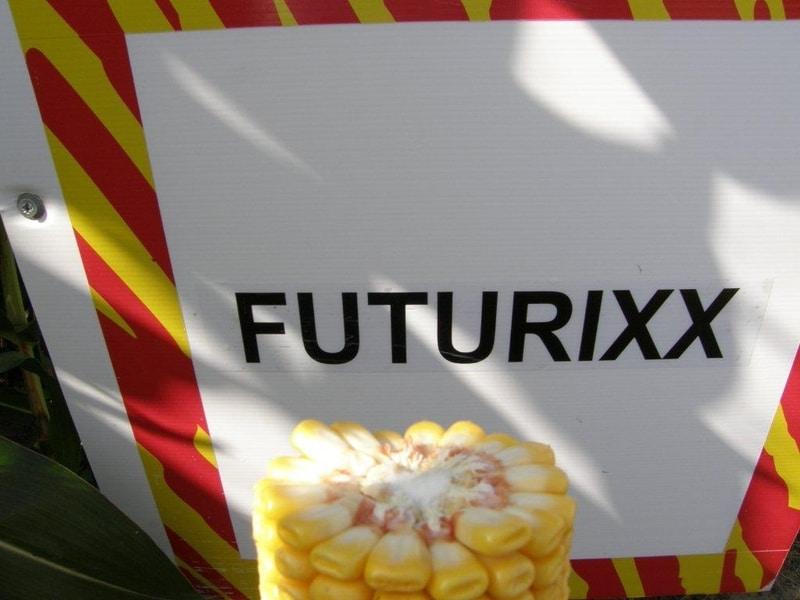 Koruzni hibrid Futurixx