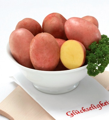 Sorta krompirja Red Fantasy