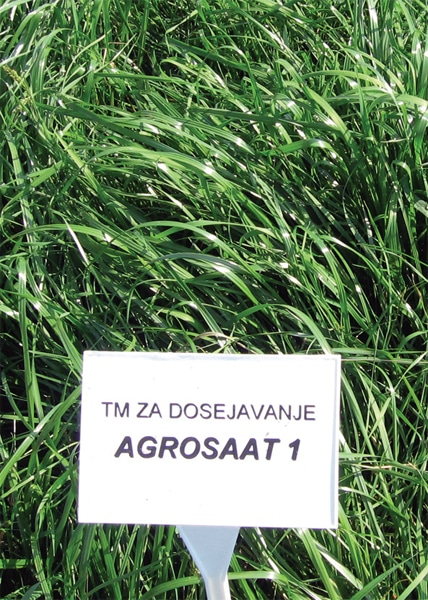 Travna mešanica Agrosaat 1