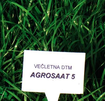 Travna mešanica Agosaat 5