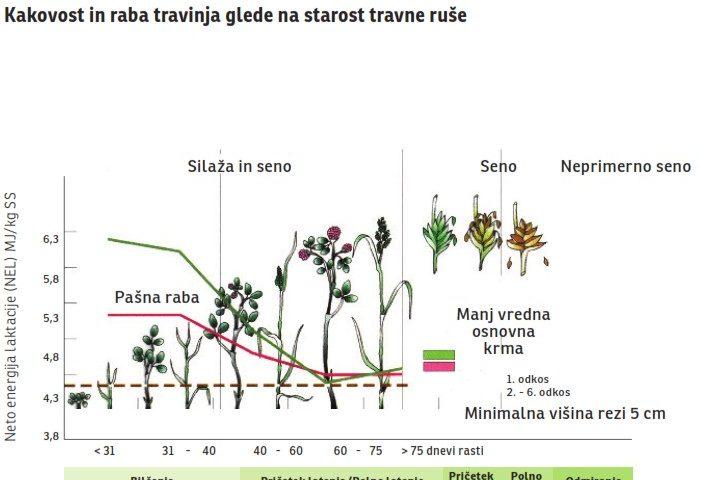 Kakovost in raba travinja glede na starost travne ruše