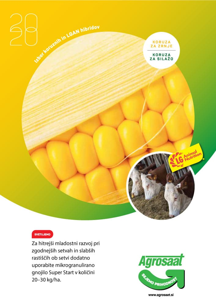 agrosaat-izbor-koruznih-lgan-hibridov-2020-1000px