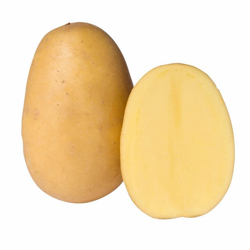 agrosaat-krompir-albertine