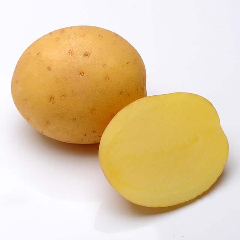 agrosaat-krompir-madeira